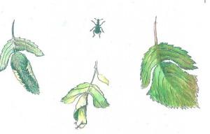 bladroller